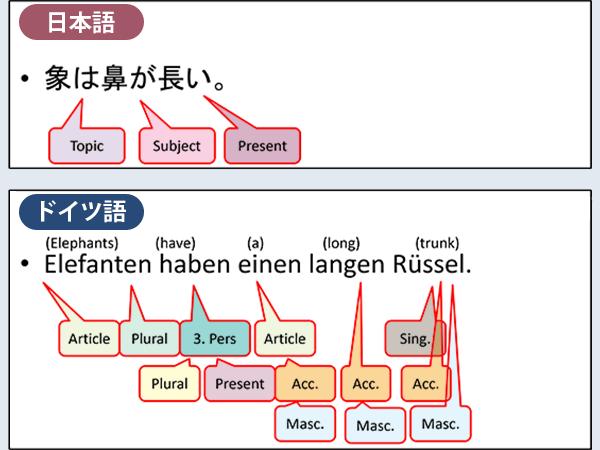 日本語の「象は鼻が長い。」と,ドイツ語の「Elefanten haben einen langen Rüssel」の文法比較