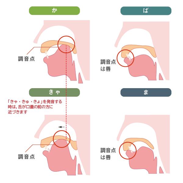 発音と調音点を示したもの(か,きゃ,ぱ・ば,ま)